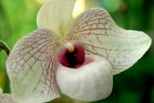 orchid1-sm